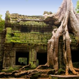 Ta Prohm temple in Siem Reap, Cambodia