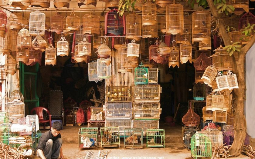 Bird Shop, Hanoi Old Quarter